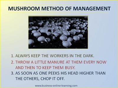 Mushroom Management Rules